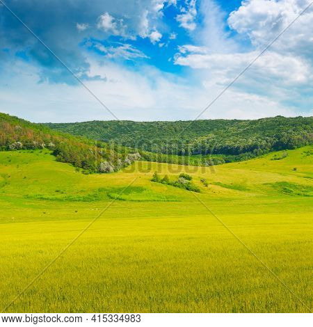 Wheat Field And Countryside Scenery. A Picturesque Hilly Area With Agricultural Land And Forests.