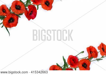 Frame Of Flowers Red Poppy And Buds ( Papaver Rhoeas, Corn Poppy, Corn Rose, Field Poppy, Red Weed )
