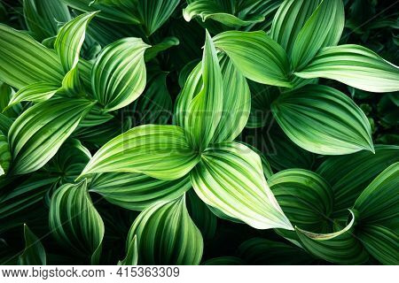 Green plants leaves close up