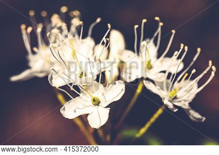 Macro Of Tiny White Flowers And Colorful Grass Background In Nature. Close Up.