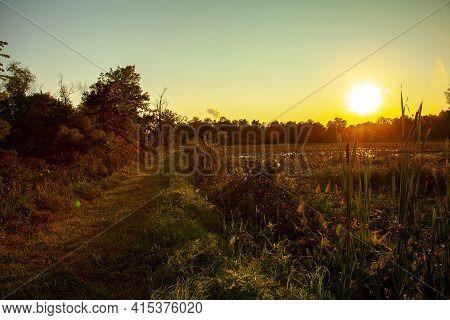 A Sunset, Sunrise Landscape View Of A Swamp Ecosystem. Back Lit Image Features Various Plants Includ