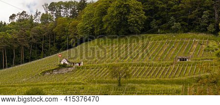 A Vineyard Built On A Slope Of A Hill. There Are White Posts Where The Grape Plants Grow. A Small Vi