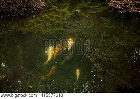 A Peaceful Abstract Image Featuring A Reflection Pond With Crystal Clear Water. Reflections Of All S