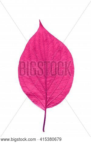Pink Leaf With Texture Isolated On White