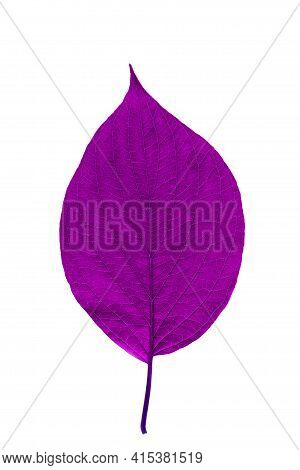 Purple Leaf With Texture Isolated On White