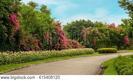 Jogging Track In Garden Of Public Park Among Greenery Trees, Flower Shrub And Bush, Black Asfalt Con