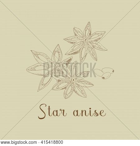 Anise Sketch Illustration In Vintage Style. Star Anise, With Grains.