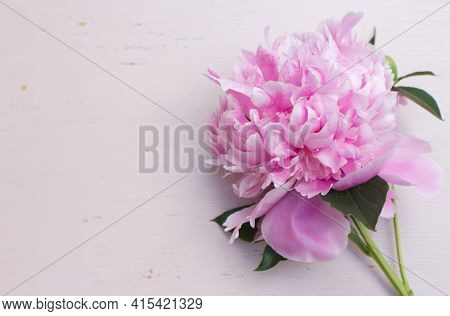 Close Up Of Pink Peony Flower Isolated On An Abraded Pink Board Background. Floral Frame Composition