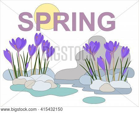 Purple Crocuses Grow From The Snow, In The Background Of The Picture There Is A Purple Inscription S