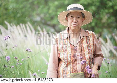 Asian Old Elderly Elder Woman Resting Relaxing In Rose Garden. Senior Leisure Lifestyle