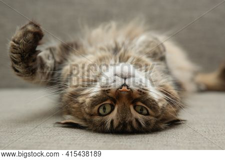 Front View Of Cute Beautiful Cat Resting