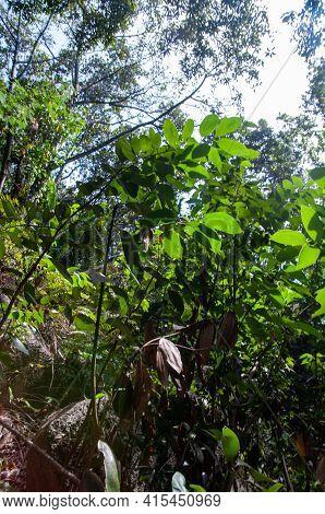 Boulder Of Granite Rock Into The Tropical Green Jungle. Seychelles