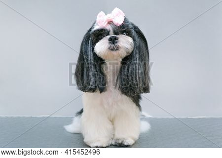 Dog In A Grooming Salon; Haircut, Comb, Hairdryer. Pet Gets Beauty Treatments In A Dog Beauty Salon.