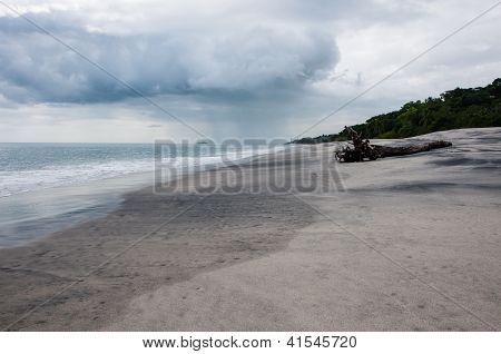 Drift wood on Beach