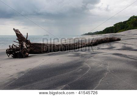 Drift Wood and Beach