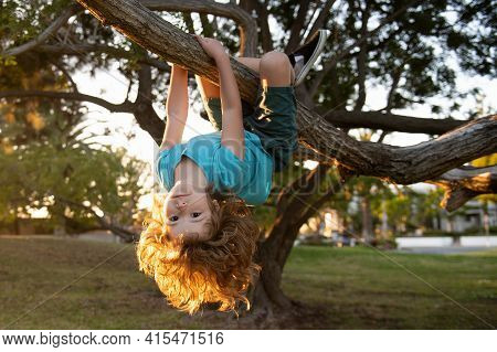 Funny Boy In A Tree. Cute Blond Child Climb A Tree. Child Hanging Upside Down On Tree
