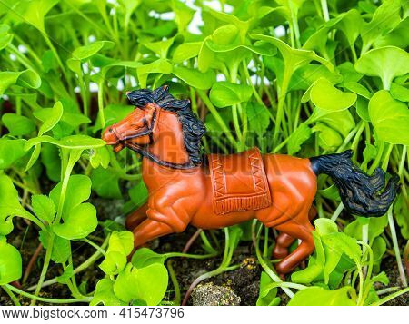 Brown Horse With Black Mane In Green Grass. The Horse Is A Pet. Horses And A Mare. Riding Horses. A