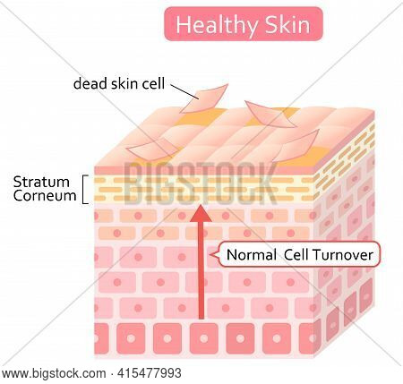 Skin Cell Turnover Process Illustration. Skin Care And Beauty Concept