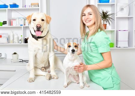 Two Cute Dogs At A Reception At The Vet
