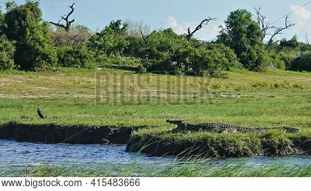 On The Bank Of The River, On The Green Grass, Lies A Crocodile With Its Mouth Open. Against The Back