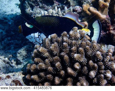 Sea Fish With Corals In Sea, Underwater Landscape With Sea Life, Underwater Photography