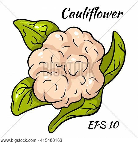 Bright Vector Collection Of Colorful Cauliflower. Fresh Cartoon Organic Vegetable Isolated On White