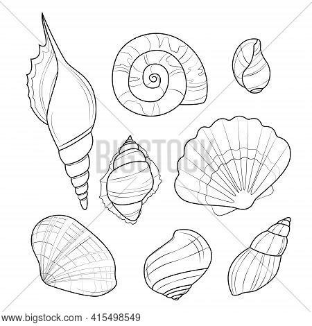 Set Of Seashells Isolated On White Background. Vector Drawing Of Seashells. Coloring Page From Seash