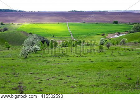 The Dirt Road Through A Green Field, Aerial View. Trail Through The Grassy Field. Spring Landscape I