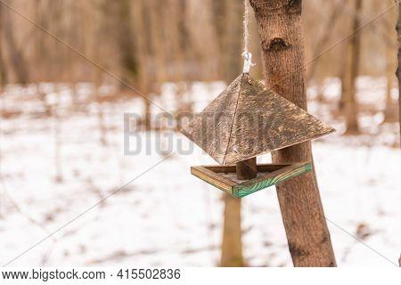 Bird Feeder In The Park. Wooden Bird Feeder On Tree Branches.