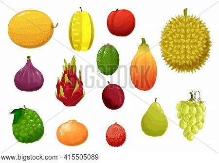 Ripe And Fresh Exotic Fruits Set. Pitaya Dragon Fruit, Durian And Carambola, Papaya Or Pawpaw, Fig A