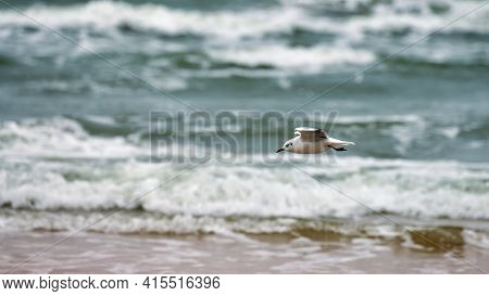 Seagull, Gull Flying Over Sea. Seascape Of Hovering White Bird On Natural Blue Water Background.