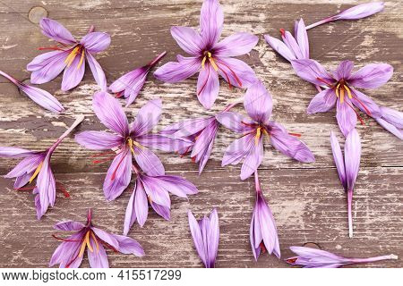 Crocus Sativus, Commonly Known As Saffron Crocus On A Wooden Background With Seashells. It Is Among