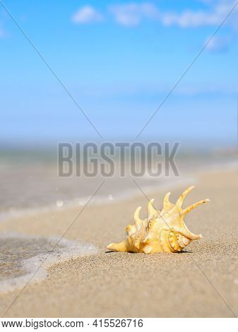 A Large Shell On The Sandy Seashore Near The Water's Edge. Vertical Landscape On A Marine Theme. Sel