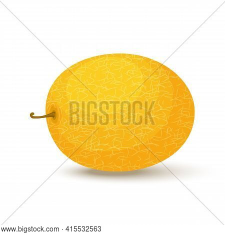 Fresh Whole Melon Fruit Isolated On White Background. Honeydew Melon. Summer Fruits For Healthy Life