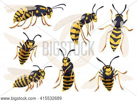 Wasp Vector Cartoon Icon Set . Collection Vector Illustration Yellow Wasp On White Background. Isola