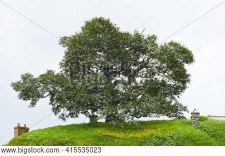 Matamata, Waikato, New Zealand - September 09. 2019: Idyllic Scenery With Big Old Tree At The Shire