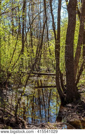 Russia. May 6, 2019. Picturesque Dams Formed In The Spring Forest With The Onset Of Thaw And Snowmel