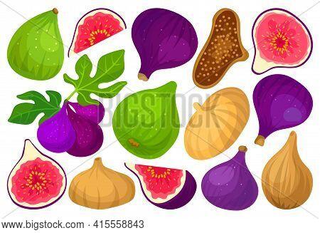 Fig Vector Cartoon Set Icon. Vector Illustration Fruit On White Background. Isolated Cartoon Set Ico