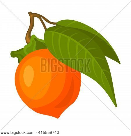 Persimmon Vector Icon.cartoon Vector Icon Isolated On White Background Persimmon.