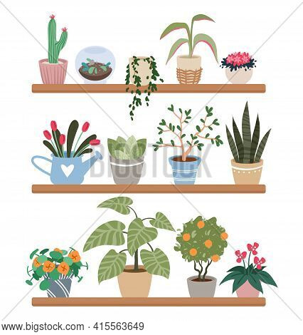Home Plants In Pots On Shelves, Houseplants Vector Illustration Set. Cartoon Indoor Green Botanical