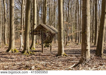 Wooden Empty Feeding Rack Standing In The Forest. Feeding Place For Wild Game. Spring Season.