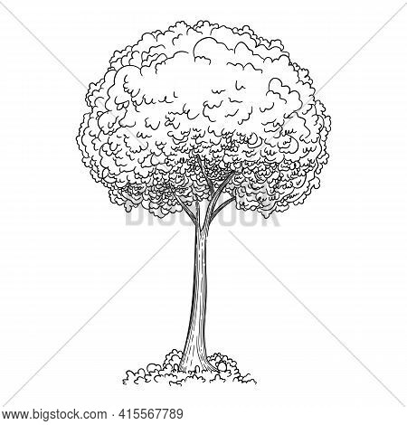 Young Tree Icon. Hand Drawn And Outline Illustration Of Young Tree Vector Icon For Web Design