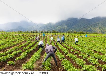Panama Boquete April 3, Some Farmers Turn Clods Of Earth Around Onion Crops. Shoot On April 3, 2021