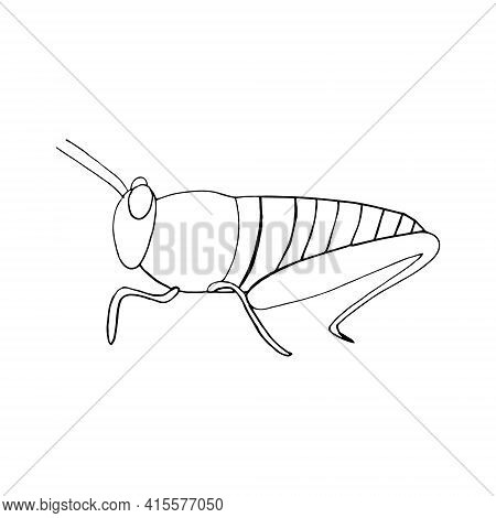 Locust Icon. Hand Drawn Doodle Style. Vector, Minimalism, Monochrome Sketch Insect Grasshopper