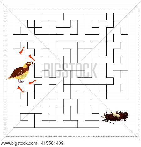 A Maze Game For Kids. Guide The Bird Through The Maze To The Nest With Eggs. Quail. Vector