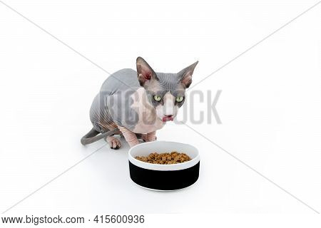 Sphynx Cat Eating Food In A Bowl Licking Its Lips. Isolated On White Background