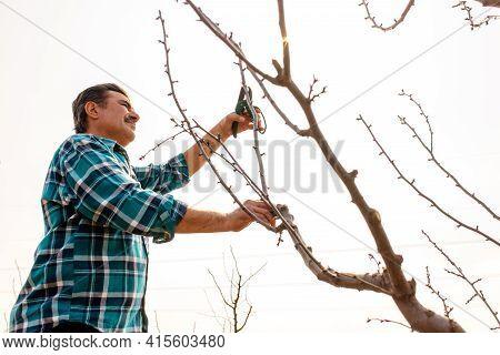 Senior Farmer Pruning Tree In Orchard. Pruning Of Fruit Trees, Spring Or Autumn Work In Garden. Gard