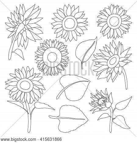 Sunflower Isolated Outline Set Icon.vector Illustration Illustration Flower On White Background .out
