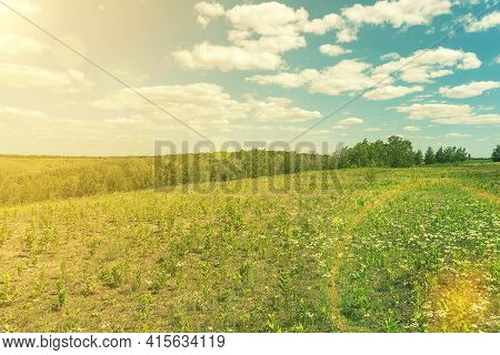 Beautiful Meadow Field With Fresh Grass And Yellow Dandelion Flowers In Nature Against A Blurry Blue