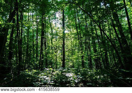 Sunlight Stains On Plants In The Dark Forest Untouched By Human